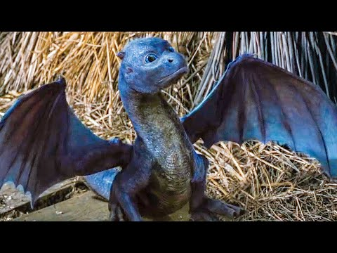 Feeding A Baby Dragon Scene - ERAGON (2006) Movie Clip