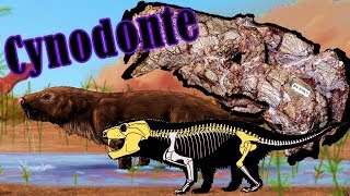 Neste vídeo eu comento um artigo que descreve uma nova espécie de Cynodonte (chamada Aleodon cromptoni) que viveu no...