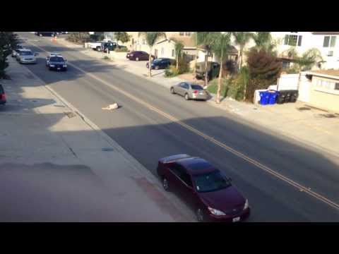 Drunk man thinks he's in Grand Theft Auto, gets hit by a car followed by obtaining a one star wanted level