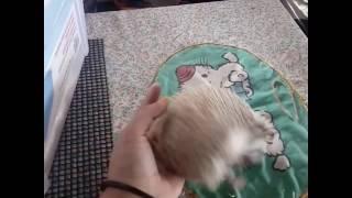 Nonton My Hedgehog ( Bobby ) Film Subtitle Indonesia Streaming Movie Download