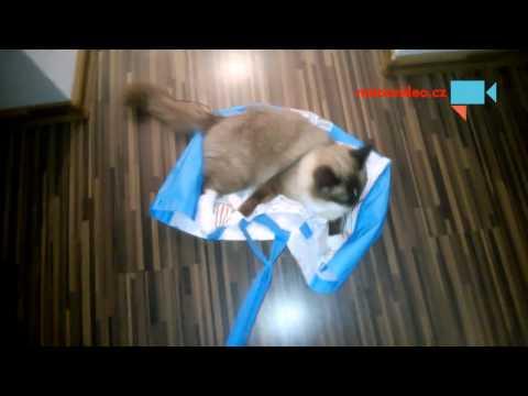 Kočičí jízda