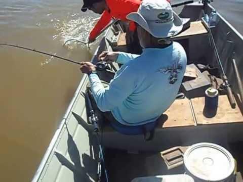 Pesca de Piau no São Francisco. Equipe Oeste fishing.