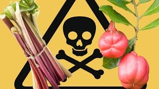 8 Insanely Dangerous Foods That People Actually Eat - YouTube