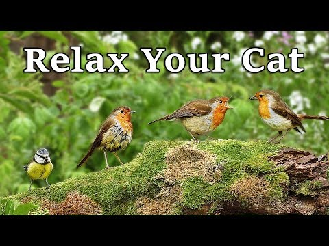 Calming Videos to Relax My Cat - Relaxing Videos for Cats to Relax at Home : The Bird Garden (видео)
