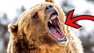 Most DANGEROUS Animals in the Arctic by Epic Wildlife