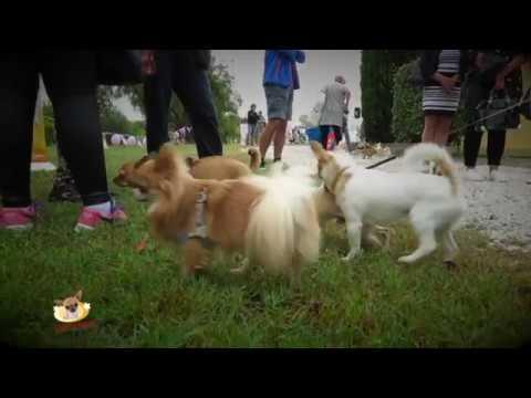 Ugopiadi 2017 [chihuahua] - Teaser della seconda edizione
