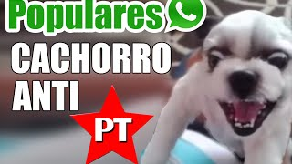 O cachorro que odeia Lula, Dilma e PT - Vídeo WhatsApp