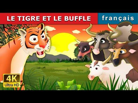 LE TIGRE ET LE BUFFLE | Tiger and Buffaloes Story in French | Histoire | Contes De Fées Français