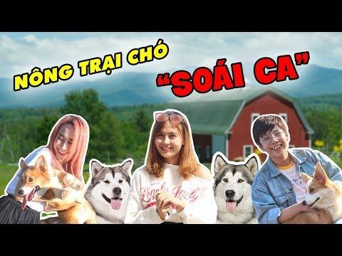 """Phát hiện trang trại """"soái chó"""" cực đẹp ở Đà Lạt - Thời lượng: 6:14."""