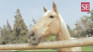 Coaching con caballos: herramienta de aprendizaje y liderazgo