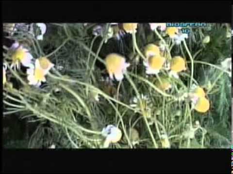 herbolaria - El Equipo de BIOSFERA 10,aborda el tema de las propiedades curativas de las plantas. Conocimientos milenarios que han trascendido hasta nuestros días. Los po...