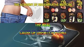 The Real Cause Of Obesity Is Found.