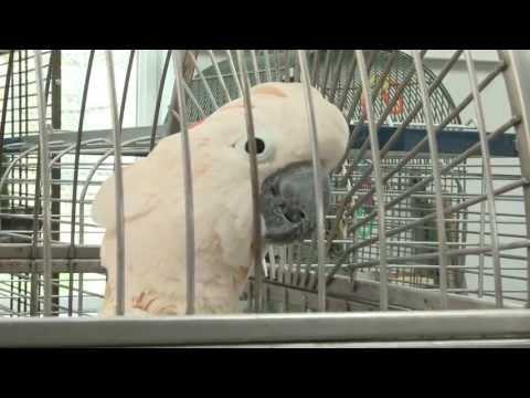 Parrot Island Sanctuary - a COF grant recipient