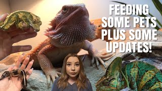 Feeding My Pets! + Reptile Room Updates! by Emma Lynne Sampson