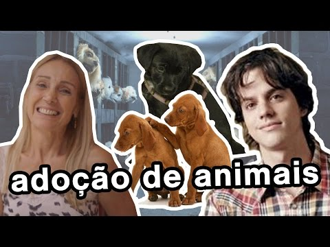 Adoção dos Cachorros (e Cadela)