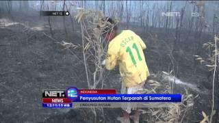Hutan Indonesia Habis Karena Kebakaran Lahan