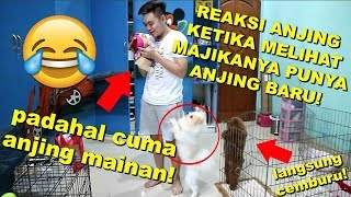Download Video PRANK PURA2 BELI ANJING BARU! ANJING GW OLAF CEMBURU!! **Ngakak** MP3 3GP MP4