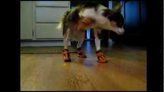 Cachorros Muito Engraçados de Bota :))