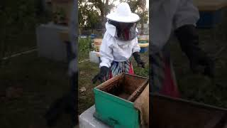 beekeeping technology