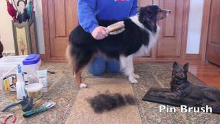 Australian Shepherd YouTube video