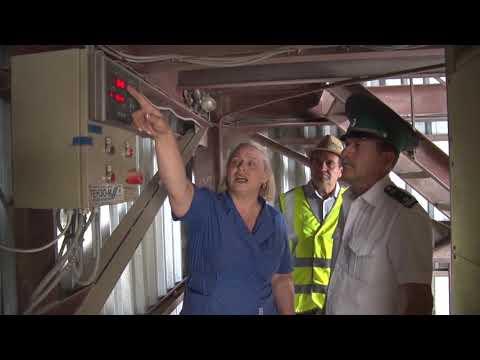 В Ростовской области Управлением Россельхознадзора осуществлен контроль партии зерна, предназначенной на экспорт в зарубежные страны