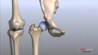 Knee Anatomy Animated Tutorial