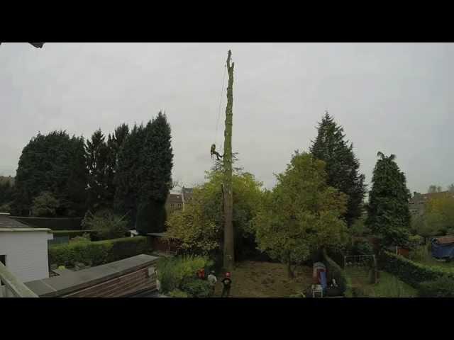 Abattage d'un Douglas de 25 m de haut par démontage