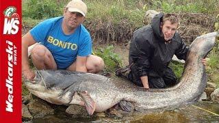 Złapał największego suma w Polsce! Zobaczcie jak wyłowiono tego giganta na zalewie w Rybniku!