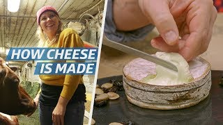 Video How Cheese Is Made — How to Make It MP3, 3GP, MP4, WEBM, AVI, FLV Agustus 2019