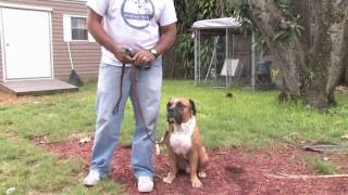 Dog Training&Care : How Do I Train A Deaf Dog?
