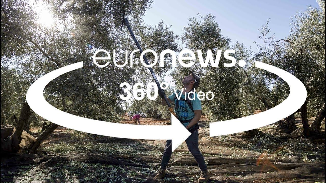 Ανδαλουσία: Σοβαρές συνέπειες για την ελιά από τον εμπορικό πόλεμο ΕΕ-ΗΠΑ