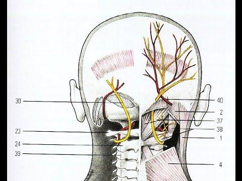 Невралгия тройничного затылочного нерва - причины, симптомы, лечение