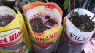 Video cara PERBANYAK TANAMAN DENGAN stek DAN root up penumbuh akar MP3, 3GP, MP4, WEBM, AVI, FLV September 2018