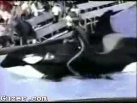 SeaWorld blooper