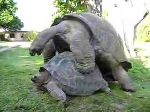 The Epic Turtle Mount