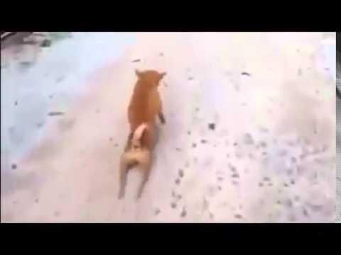 Chú chó tội nghiệp ! :(