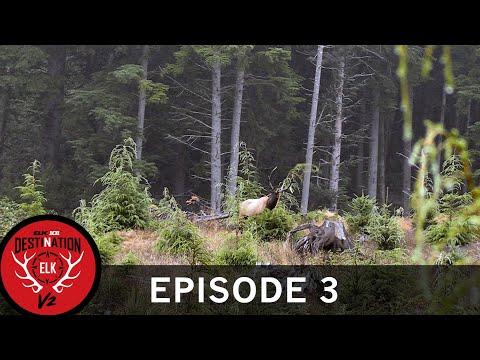 Calling a Roosevelt Herd Bull Away from the Cows (Destination Elk V2: Episode 3)