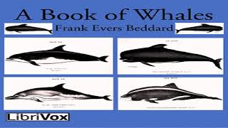 Book of Whales | Frank Evers Beddard | Animals, Nature, Reference | Talking Book | English | 6/7