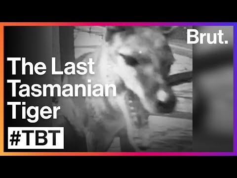 #TBT: The tragic death of the Tasmanian tigers