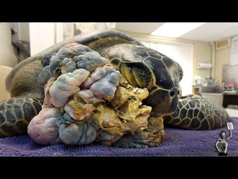 以為撿到普通海龜 仔細一看卻發現情況有異!