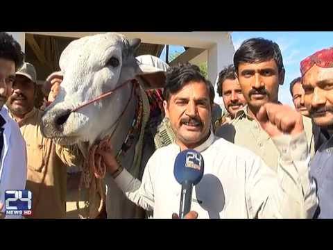 Sibi mela celebration in balochistan