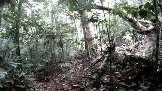 Temerloh Malaysia  city photos gallery : SKL - Hiking to Gua Senyum, Temerloh, Pahang, Malaysia. (Video-8)