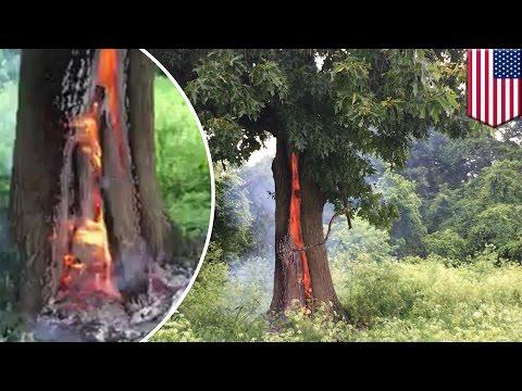 恐怖直擊!!大樹遭雷劈一半,直接起火燃燒...