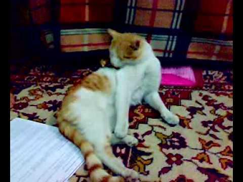 بزونه - بزونة تكره تواجد الحشريين اثناء وقت راحتها قطة حلوة ا.
