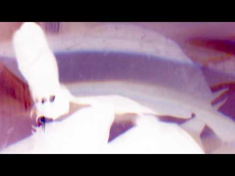 Kiki - Birds (A Cappella) feat. Lykke Li (видео)