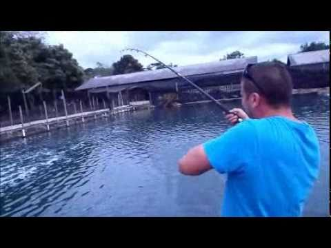 Singapore Giant Trevally (GT) Fishing Pond
