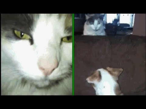 Try Not To Laugh Feb 2019! Best Funny Cat Videos Compilation! Very Funny Animals Videos