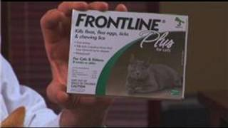 Cat Care&Health : How To Get Rid Of Fleas On Cats