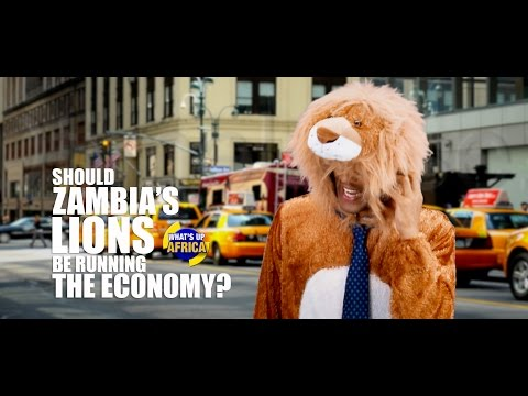 SHOULD ZAMBIA'S LIONS BE RUNNING THE ECONOMY?