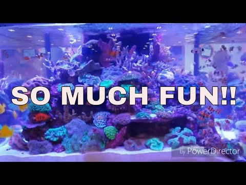 So many AQUARIUMS  to see!_Akvárium